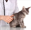Ветеринарные клиники в Мамонтово